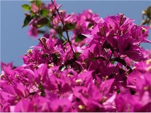 Apartmani Anita Veli Lošinj - otok Lošinj,Rezerviraj Apartmani Anita Od 821 kn