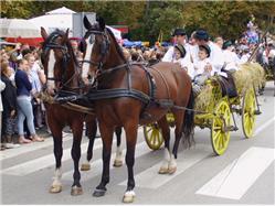 Autumn Festival  Local celebrations / Festivities
