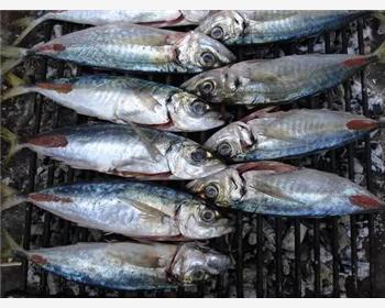 Трогирская рыбацкая ночь