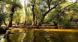 Természetvédelmi terület Kopacki rit