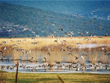 Természetvédelmi terület Vransko jezero