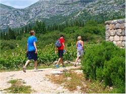 Walk With Donkey Through Magical Dubrovnik Countryside Molunat