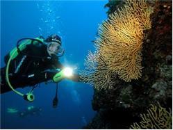 Split: Discovery dive in Trogir Necujam - wyspa Solta