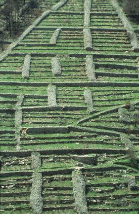 Starogradsko polje