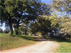 Un gruppo di alberi intorno alla chiesa di Sant'Anna vicino a Cervar Montona (Motovun) Luoghi