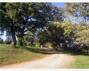 Le groupe d'arbres situé autour de l'église St Anne près de Cervar