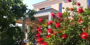 Hiša - Korcula - otok Korcula