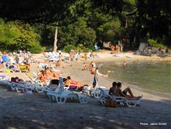 Pine beach  Plaža