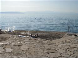 Haludovo Dobrinj - ön Krk Plaža