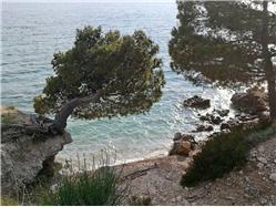 Cvitačka  Plaža