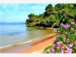 Kostanj Zdrelac - ostrov Pasman Plaža