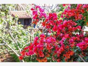 Appartementen JULIA Veli Losinj - eiland Losinj,Reserveren Appartementen JULIA Vanaf 66 €